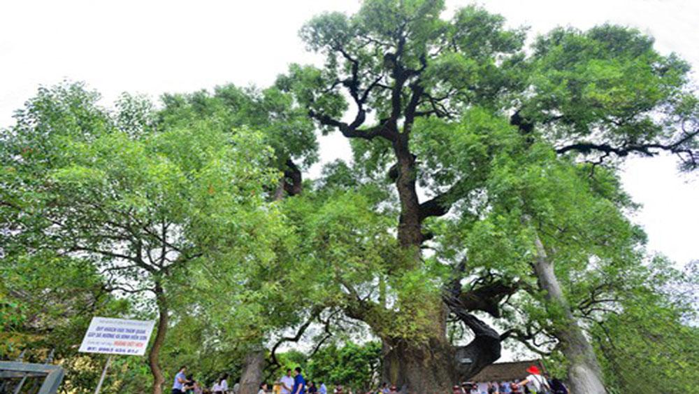 Nhiều hoạt động hấp dẫn  trong Lễ hội Tiên Lục (Lạng Giang)